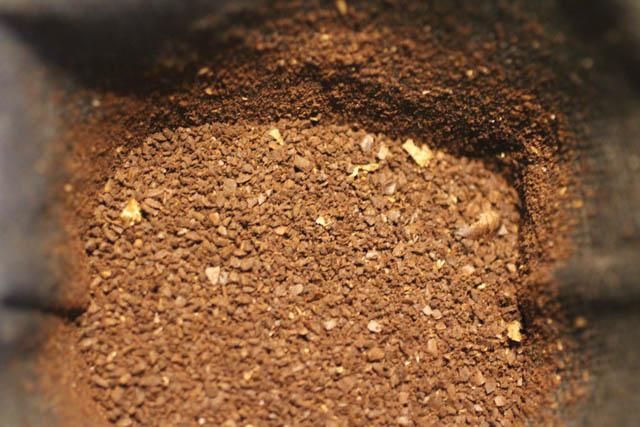 挽いたコーヒー(珈琲)の粉を入れる